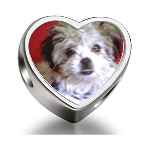 Pandora Little Terrier Heart Photo Charm