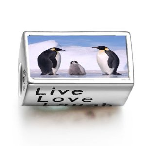 Pandora Penguin In Antarctica Words Live Love Laugh Photo Charm
